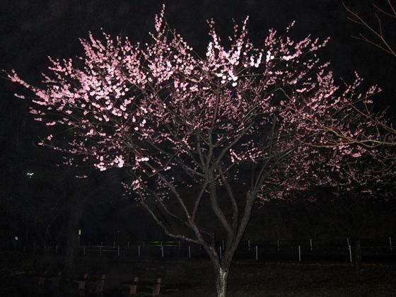 3月の夕焼け028