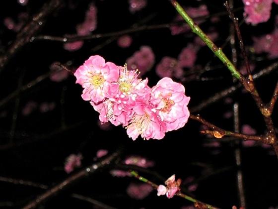 3月の夕焼け029