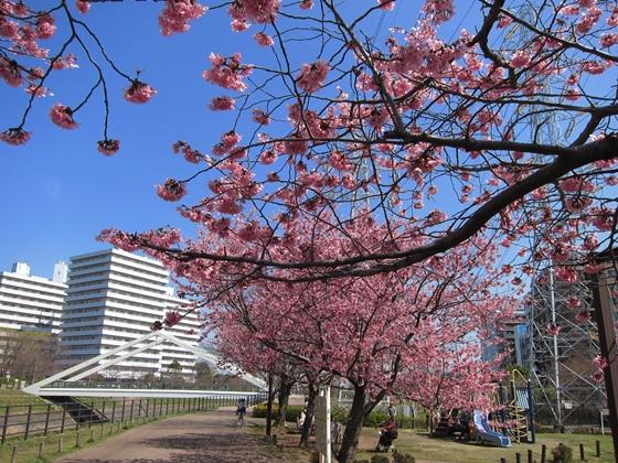 0319桜開花001