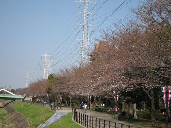 0319桜開花015