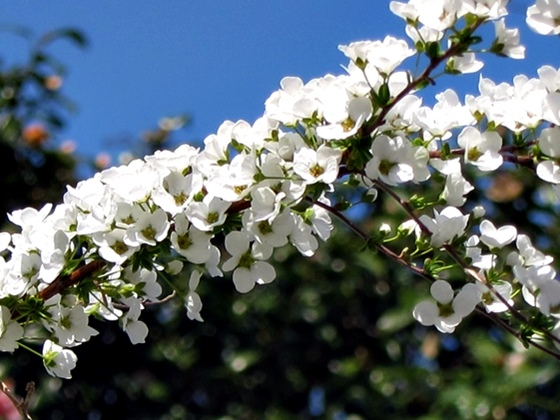 3月の花012