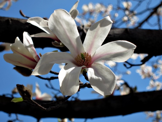 3月の花009