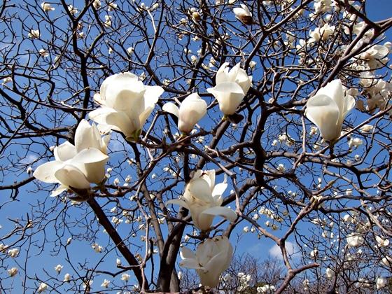 3月の花011