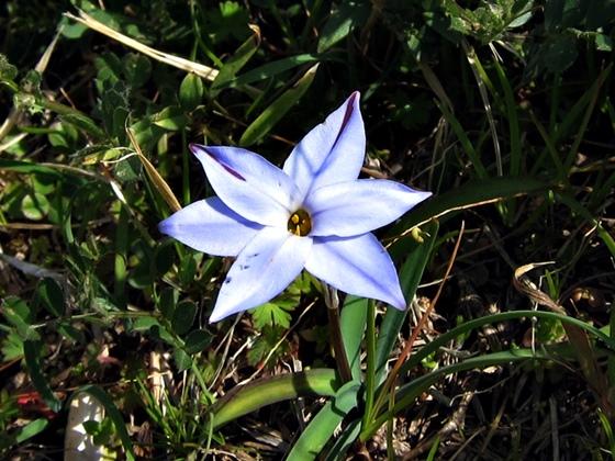 3月の花002