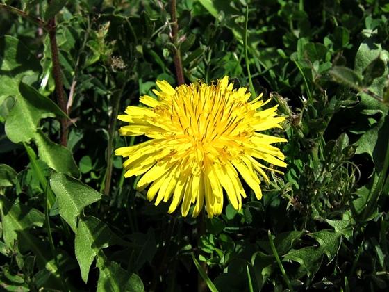 3月の花004