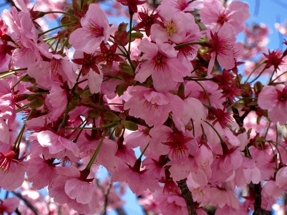 3月の花008