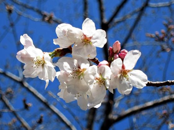 3月の花15