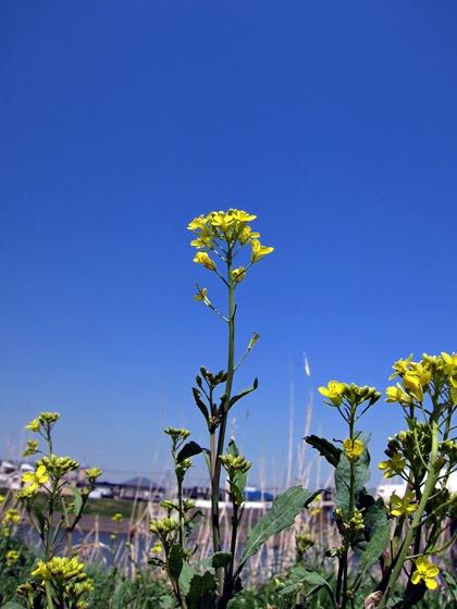 3月の花001