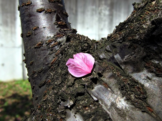 3月の花005