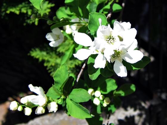 3月の花16