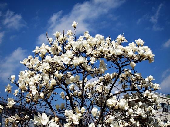 3月の空と花と夕焼け08