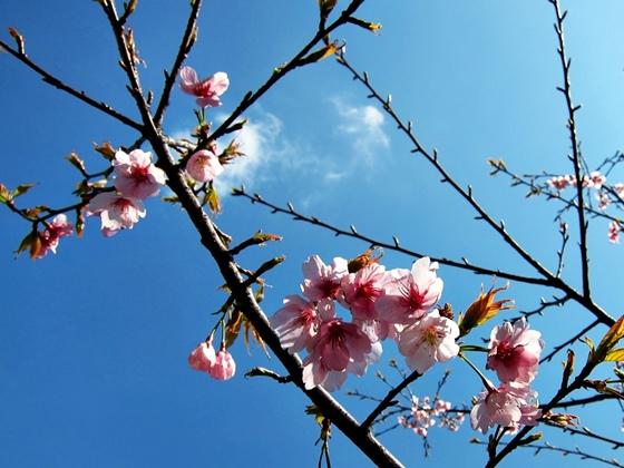 3月の空と花と夕焼け07