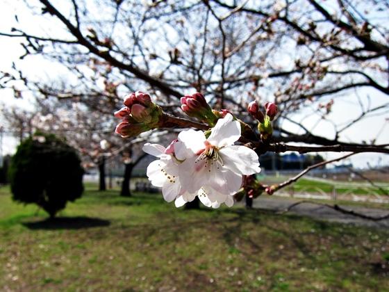 3月の空と花と夕焼け09