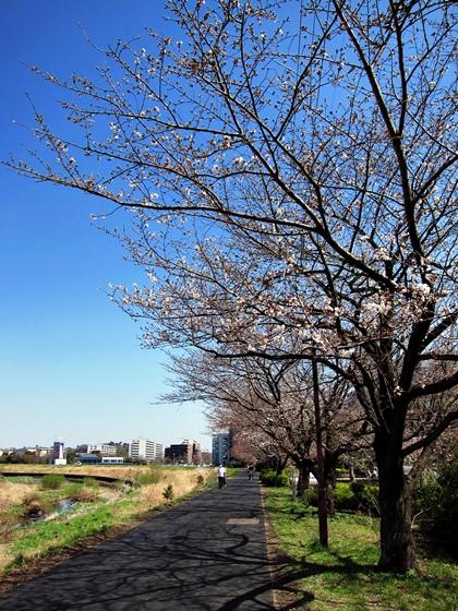 3月の空と花と夕焼け010