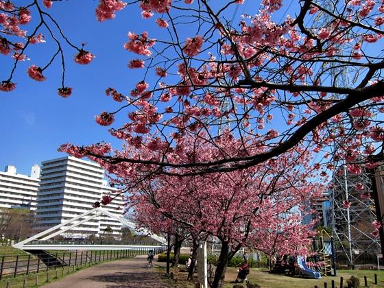 3月の空と花と夕焼け011