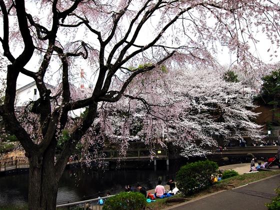 3月の空と花と夕焼け015
