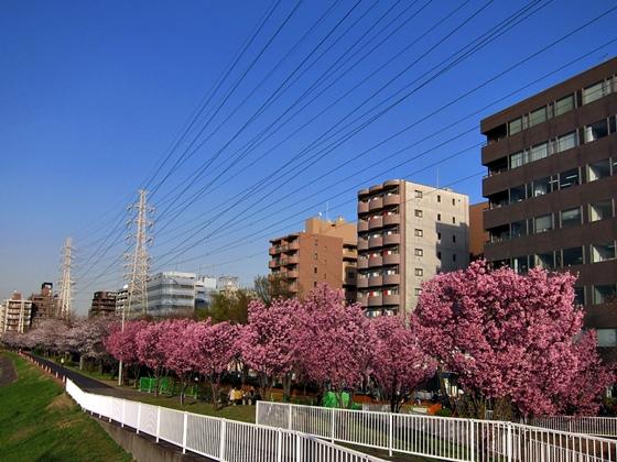 3月の空と花と夕焼け013