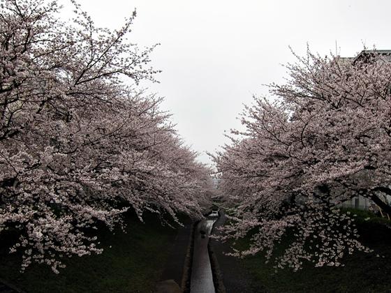 3月の空と花と夕焼け018