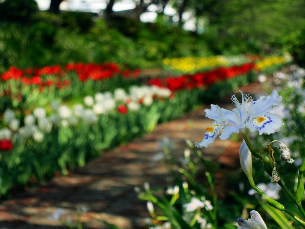 0416花の写真011