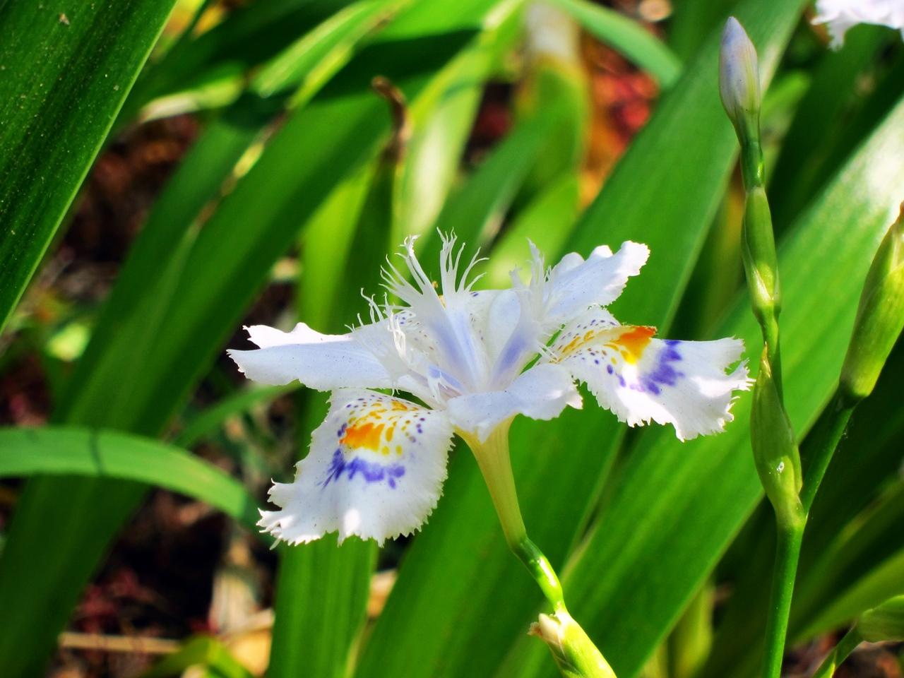 0416花の写真004