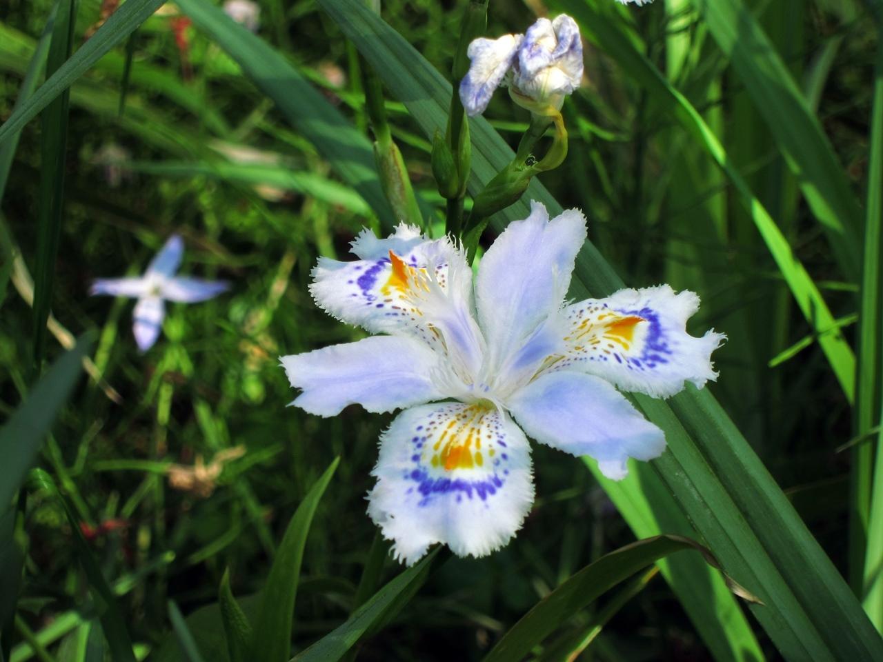 0416花の写真007
