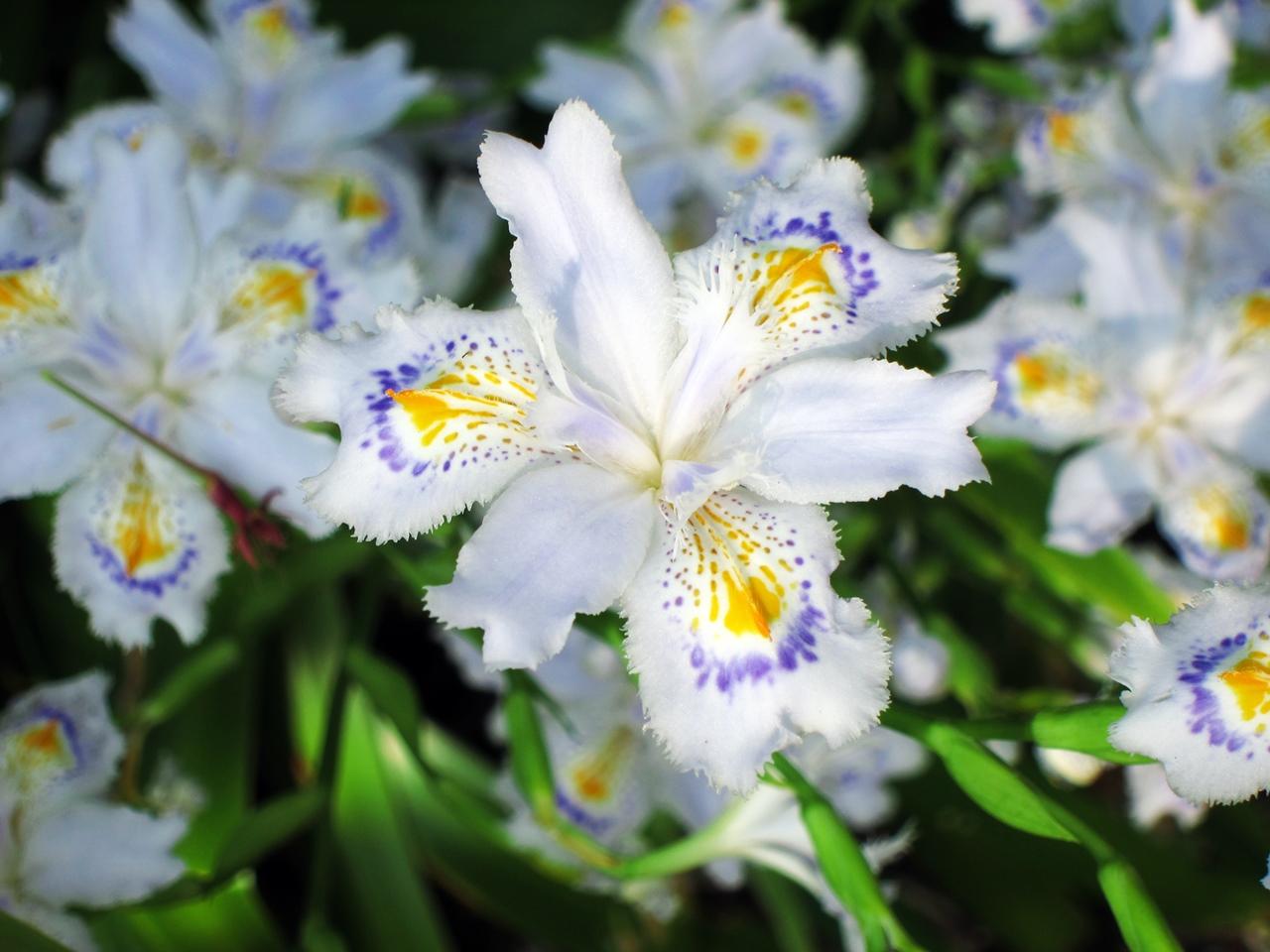 0416花の写真016