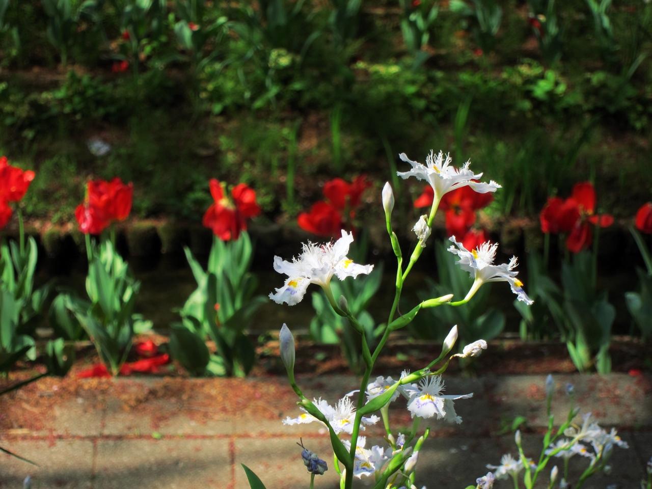 0416花の写真014