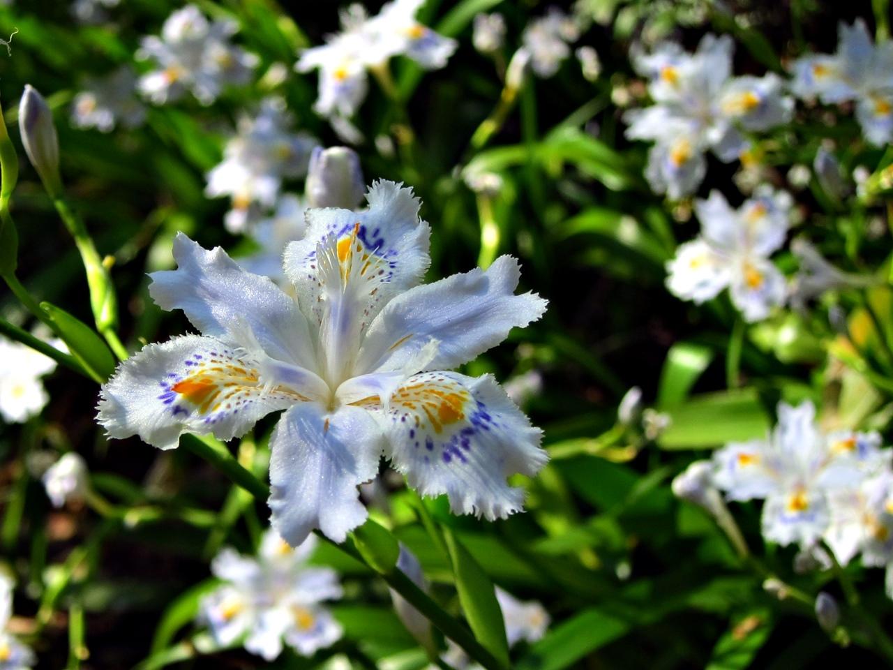 0416花の写真022
