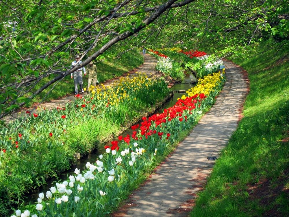 0416花の写真028