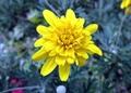 Flower-009