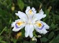 Flower-010