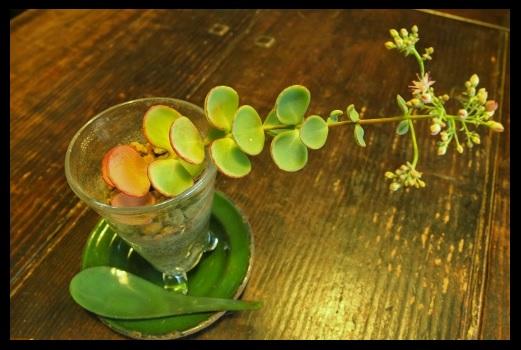 ビンの中で開花。