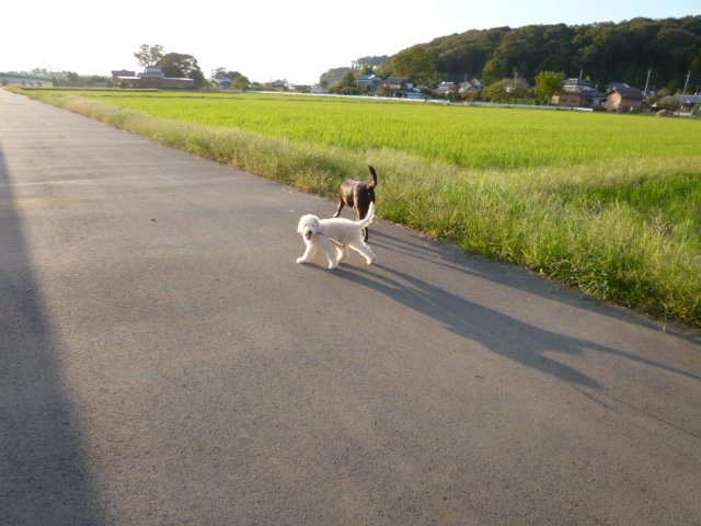 初散歩 042