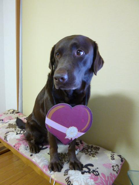 バレンタイン 020