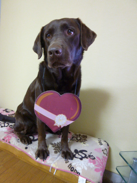 バレンタイン 021