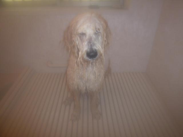 洗犬 004