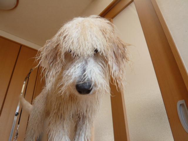 洗犬 007