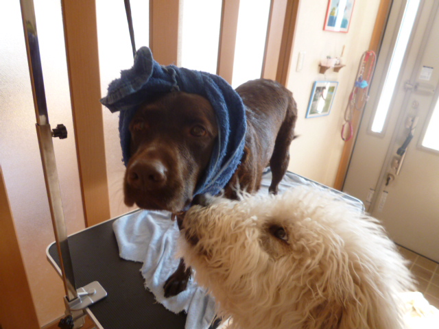 洗犬 002