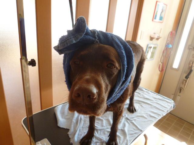 洗犬 003