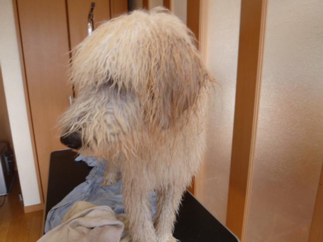 洗犬 005