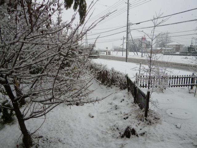 雪 009