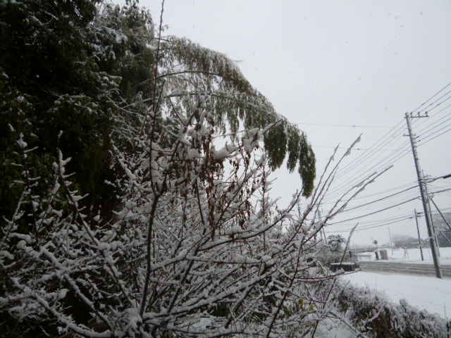 雪 011