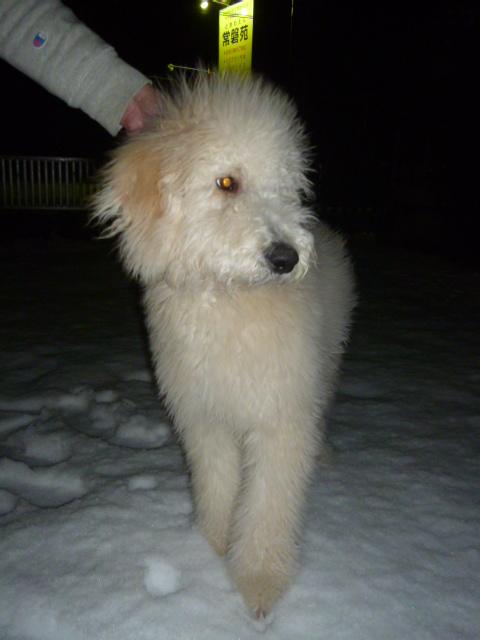 雪 015