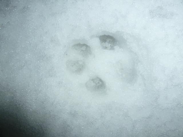 雪 018