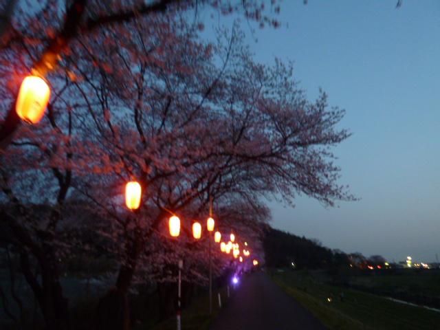 夜桜 031