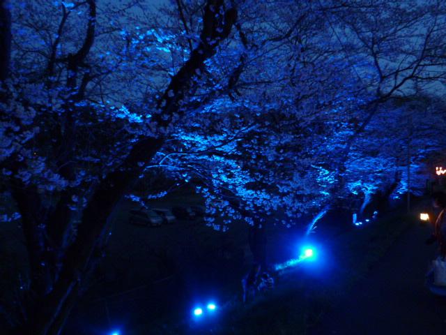 夜桜 034