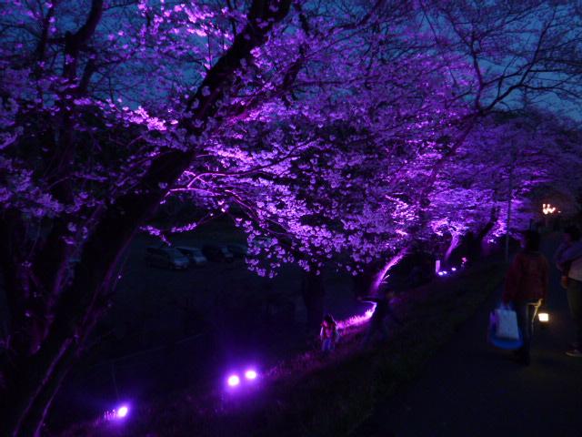 夜桜 035