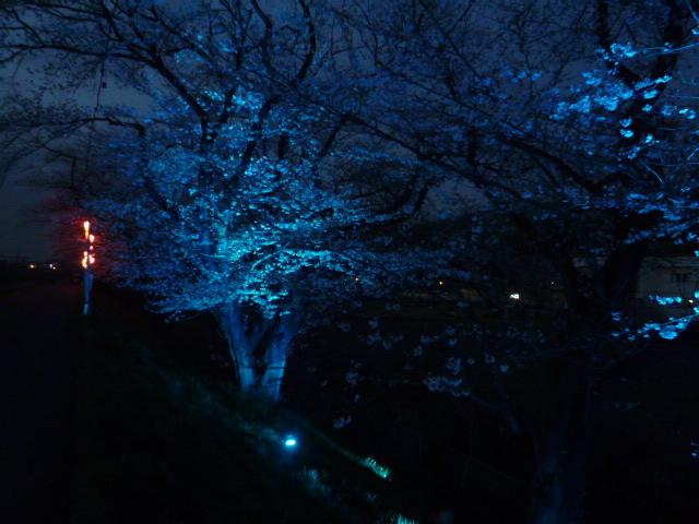 夜桜 044