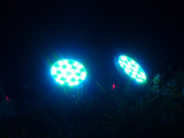 夜桜 039