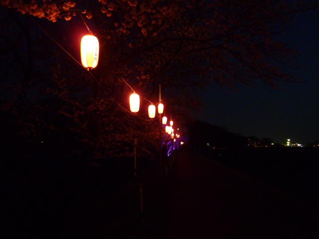夜桜 061